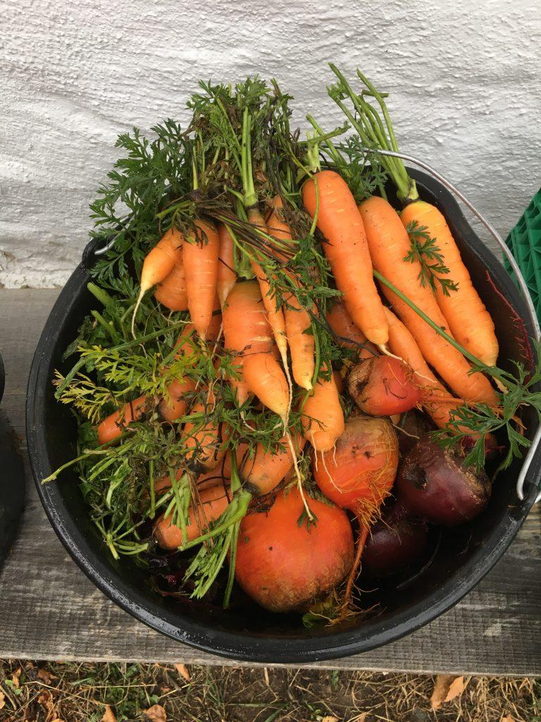 Rotgrønnsaker